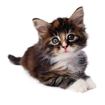 Yahoo video surprise kitty